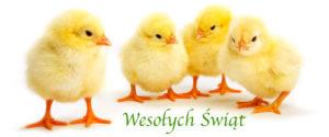 kurczaki-wielkanocny-zyczenia